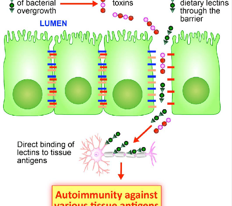 Immunoreactivity of Anti-AβP-42 Specific Antibody with Toxic Chemicals and Food Antigens