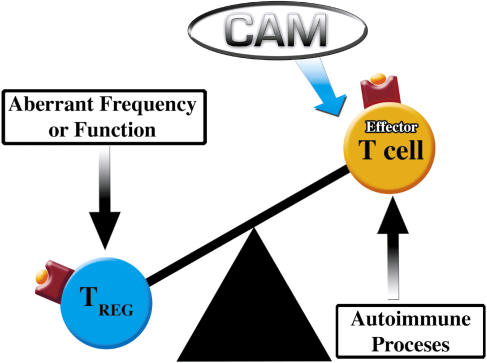 Regulatory T Cells, a Potent Immunoregulatory Target for CAM Researchers: Modulating Tumor Immunity, Autoimmunity and Alloreactive Immunity (III)